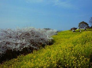 14年春の景色